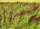 群馬県産 八雑穀米2、2k農家より