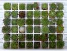 多肉植物 センペル 大量48種 寄せ植えセット 【203】