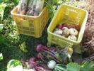 農家直送有機野菜6品送料込