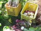 農家直送野菜6品前後+鶏卵10個米2kg詰合せセット送料込
