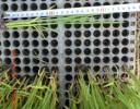 H28年度産新米コシヒカリ無農薬玄米29.5kg 食味80