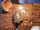 【動画有】リクガメ等爬虫類床材 ヤシガラ25L ヤシの実チップ