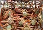 ◇ 新鮮!!  鳥取 親ガニ セコガニ 生ガニ 約1Kg 送料無料 ◇