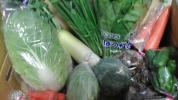 農家直送有機野菜8品 鶏卵12個詰合せセット送料込