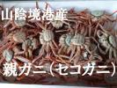 ☆即決 山陰境港産 セコガニ(親ガニ)中 折れ 30杯 生