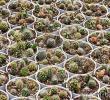 種子x100粒 サボテン ミックス種子 ALL CACTI MIX