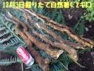 12/3掘りたて天然自然薯 4.2キロ 鹿児島産 野生の滋味 粘り最高!