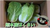 熊本産☆☆☆白菜!!★家庭用★8~10本入!!
