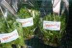 手渡し歓迎.農薬不使用.新鮮さ抜群.野菜工場レタス(1箱20袋)1204