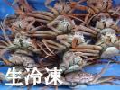 ☆鳥取境港産 セコガニ(親ガニ)  折れ 中 15杯 生冷凍