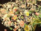Tomesode - ★作家物・手描き花々に小鳥【京友禅本手加工/黒留袖】
