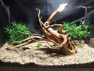 36【流木】ブランチウッド★アーチ形★検 水槽 ADA 熱帯魚