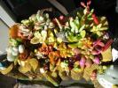 多肉植物・トトロ鉢 寄せ植え