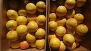 【送料半額】訳ありグレープフルーツ混合10kg
