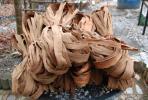 ★国産/宮城県産★山葡萄の皮(樹皮)約3kgかごバッグ材料★増量有