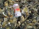 送料無料!日本三景松島産 殻付き牡蠣 無選別★SS13kg加熱用 即日発送も発送予約も2週間以内可能です。