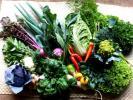 ★☆3種の切干大根と冬野菜9点セットをお試し下さい。☆★