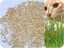 送料無料★猫草の種★たね 40g(800~1000粒)★キャットcatねこ