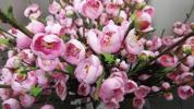 ■新品!業務用大量 【造花】梅 PK 1箱24本入り フラワ