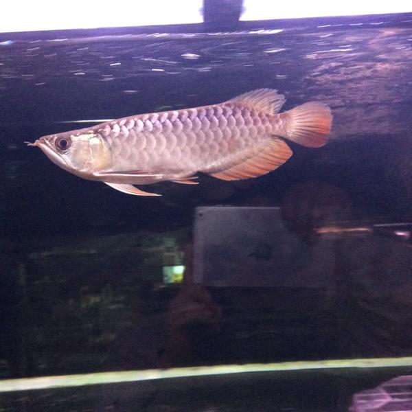 壁纸 动物 鱼 鱼类 600_600