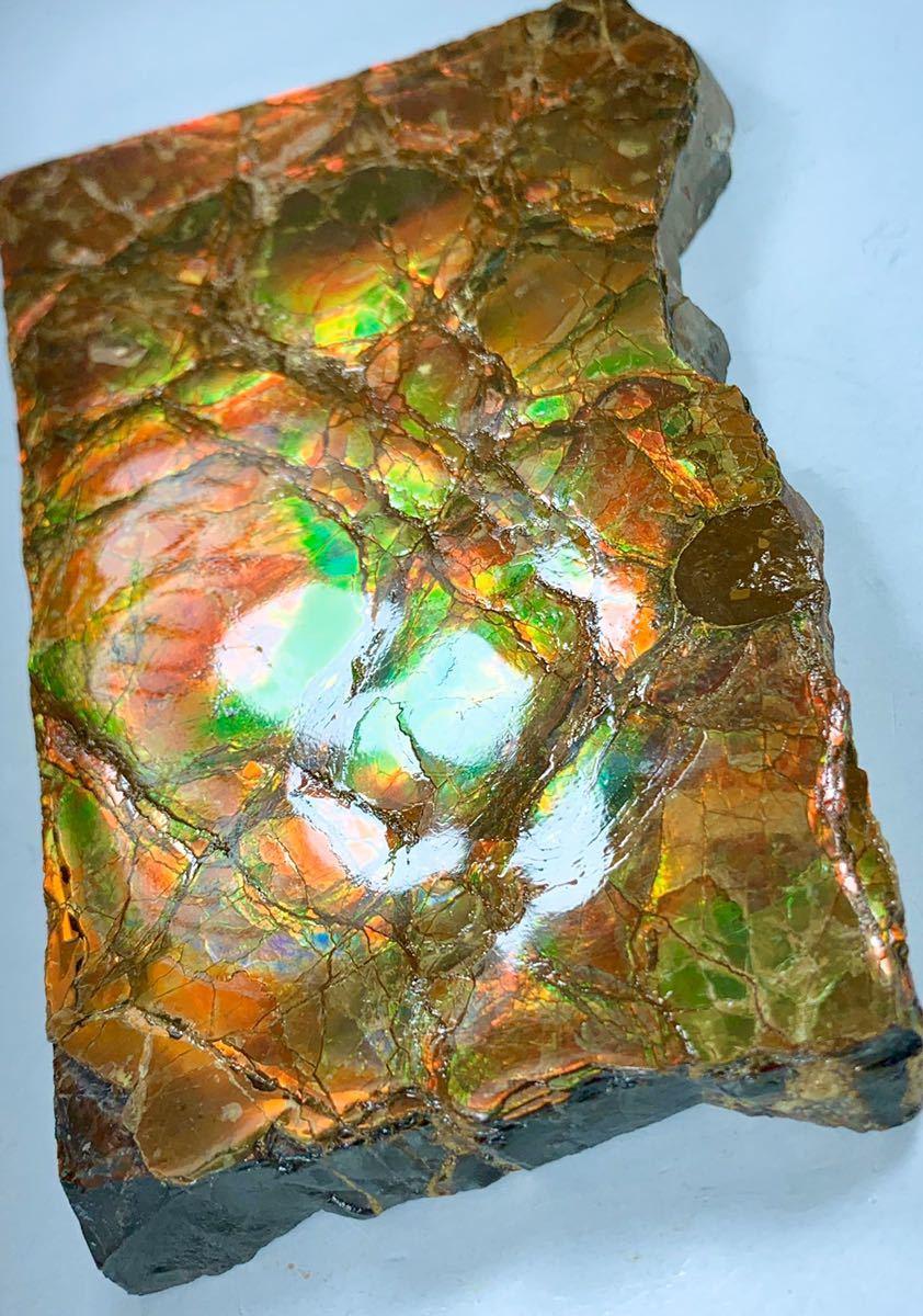 【送料無料 消費税負担なし】カナダ直輸入 アンモライト 大型原石 14cm オパール化 宝石 赤緑 遊色虹色 プラセンチセラス 裏面色有◆超レア