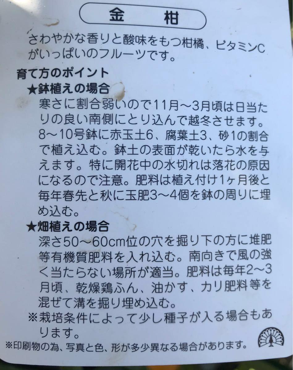 ぷちまる 種なし 金柑PVP接木苗木_画像2