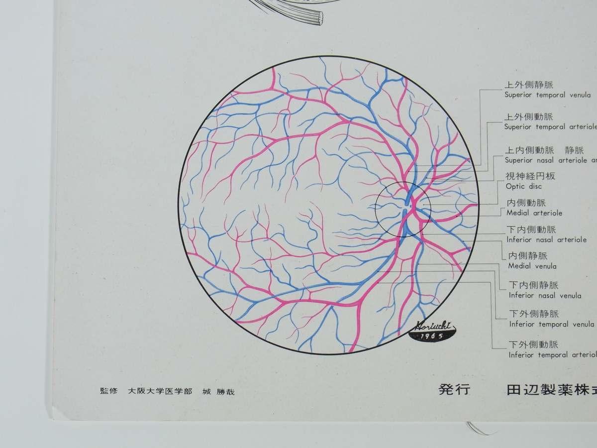 眼の血管 アドナ(AC-17) 田辺製薬株式会社 昭和 厚紙1枚 A4 医学 医療 治療 病院 医者 薬学 薬剤 眼科_画像6