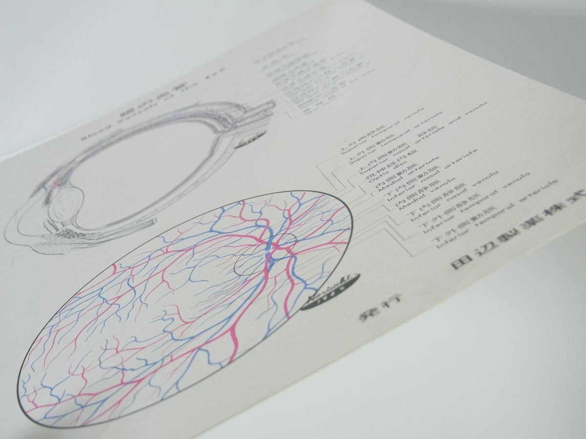 眼の血管 アドナ(AC-17) 田辺製薬株式会社 昭和 厚紙1枚 A4 医学 医療 治療 病院 医者 薬学 薬剤 眼科_画像8