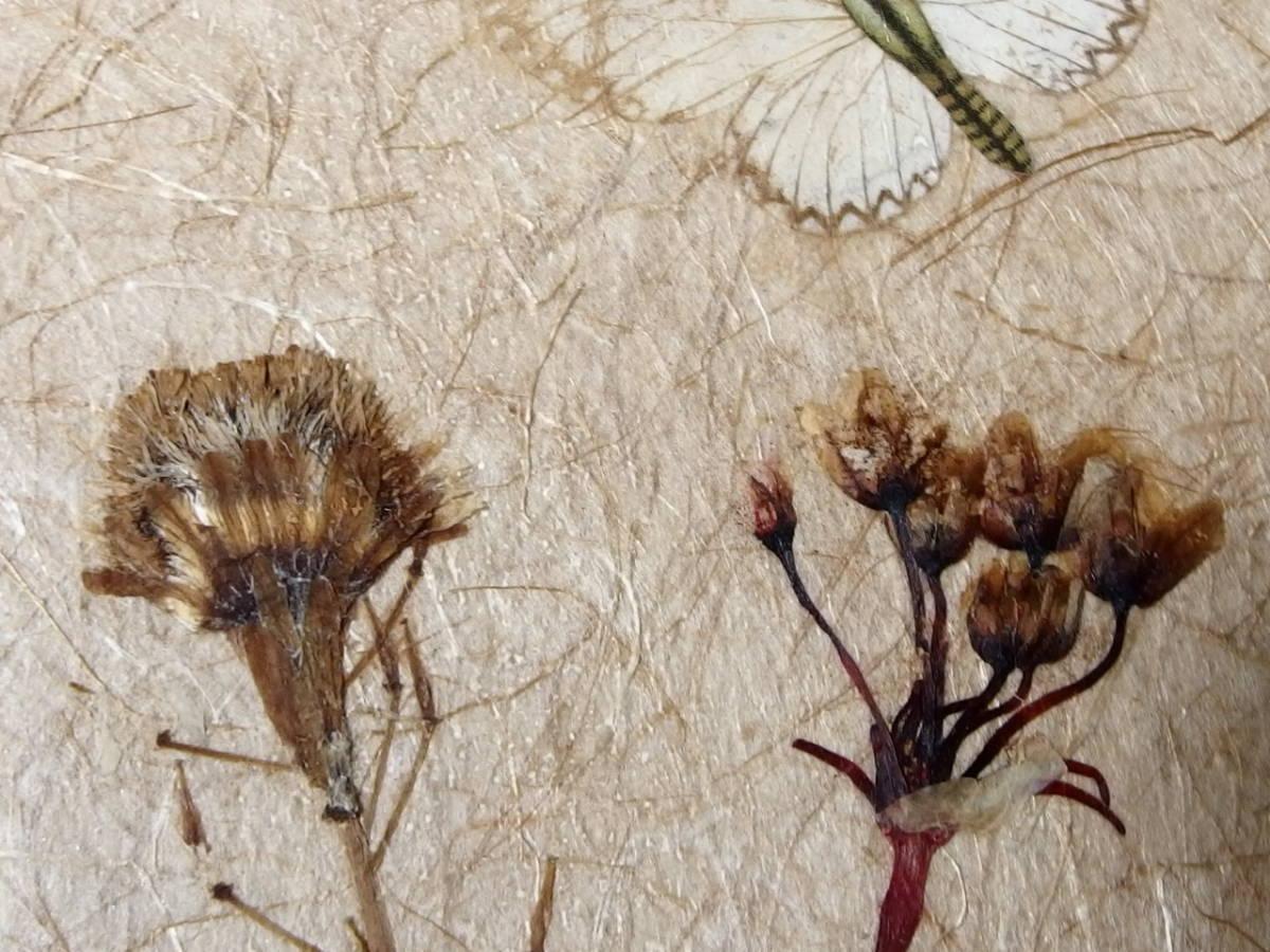 フランスアンティーク 壁飾り 額 フレーム コラージュアート 額縁 押し花 蝶 標本 絵画 コラージュアート_画像4