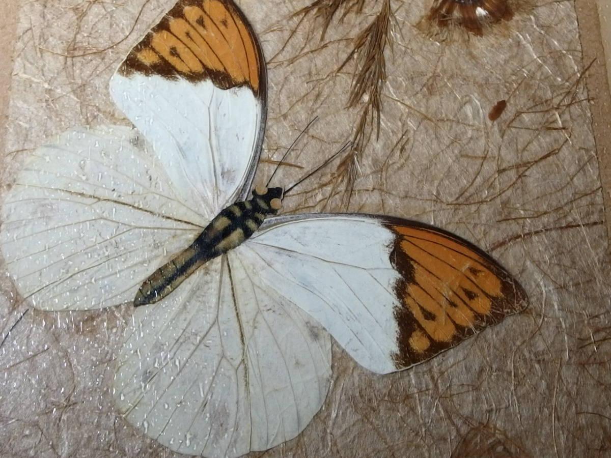 フランスアンティーク 壁飾り 額 フレーム コラージュアート 額縁 押し花 蝶 標本 絵画 コラージュアート_画像5