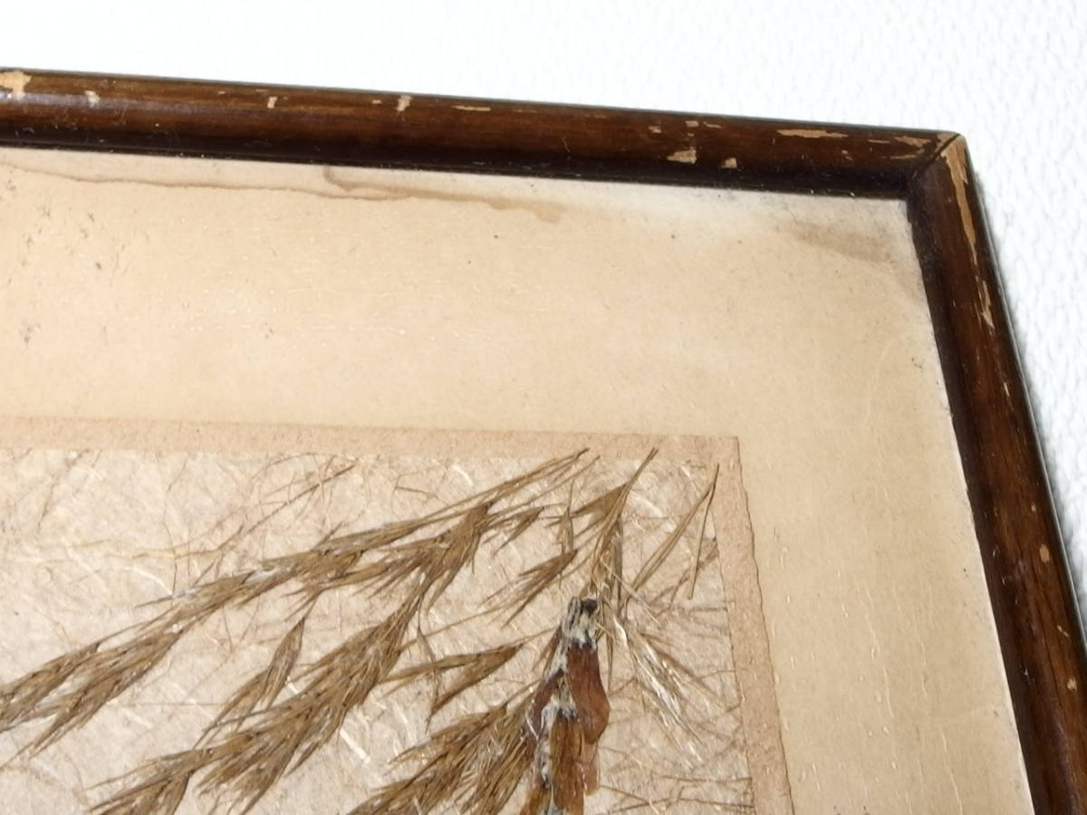 フランスアンティーク 壁飾り 額 フレーム コラージュアート 額縁 押し花 蝶 標本 絵画 コラージュアート_画像7