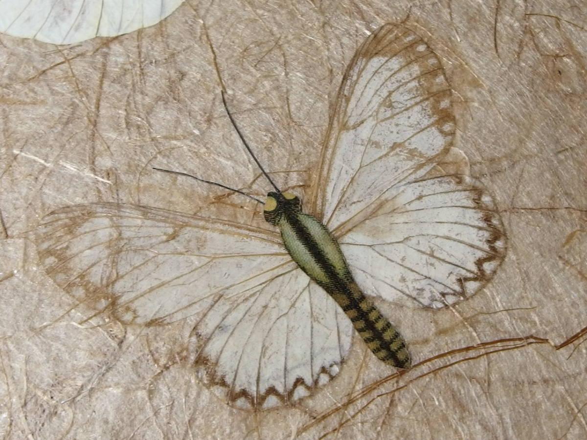 フランスアンティーク 壁飾り 額 フレーム コラージュアート 額縁 押し花 蝶 標本 絵画 コラージュアート_画像9