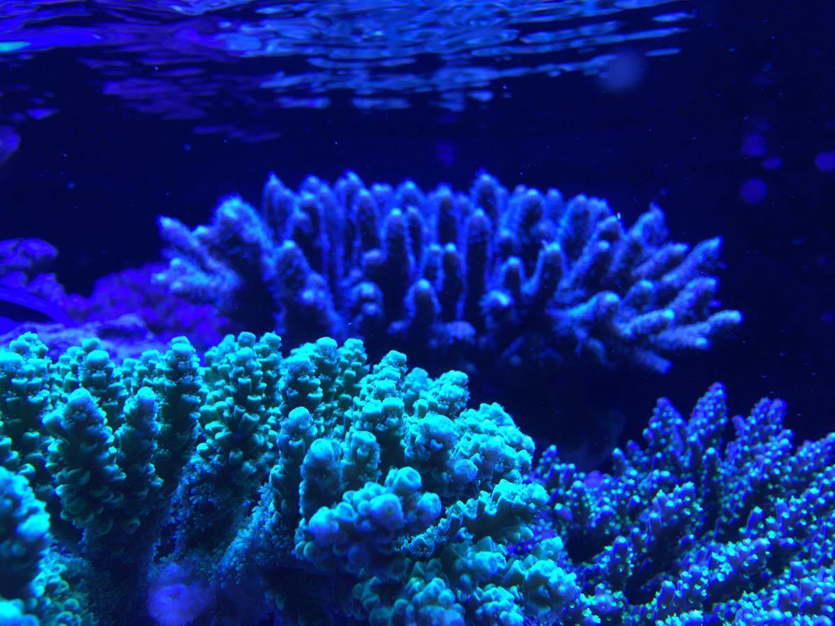 サンゴ水槽カスタムLEDライト20000kタイプ フルスペクトル165w プリズムレンズ 調光機能付き 3台セット 特価_画像9