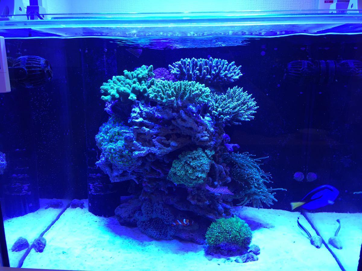 サンゴ水槽カスタムLEDライト20000kタイプ フルスペクトル165w プリズムレンズ 調光機能付き 3台セット 特価_画像8