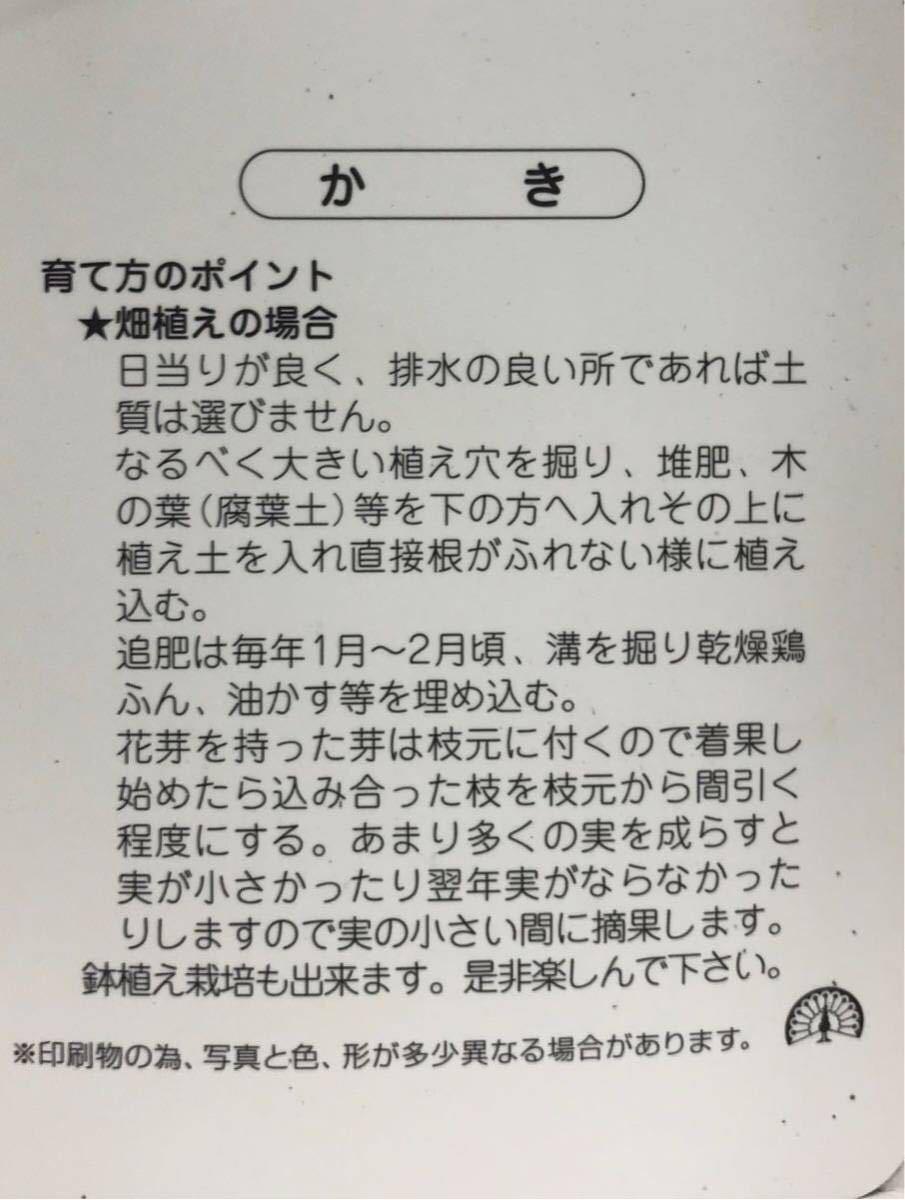 黒柿 甘柿苗木_画像2