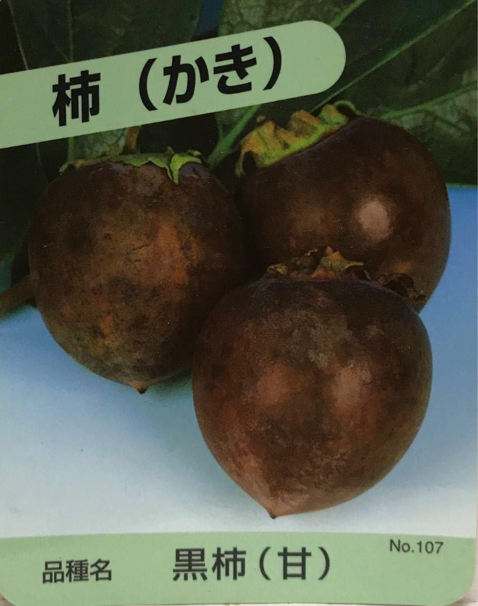 黒柿 甘柿苗木_画像1