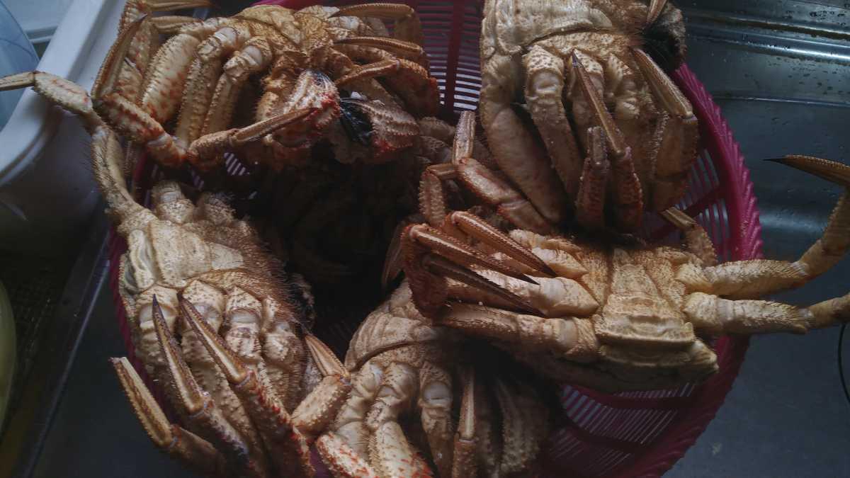 (蟹)トゲクリ蟹3匹シャコエビ3本セット_画像1