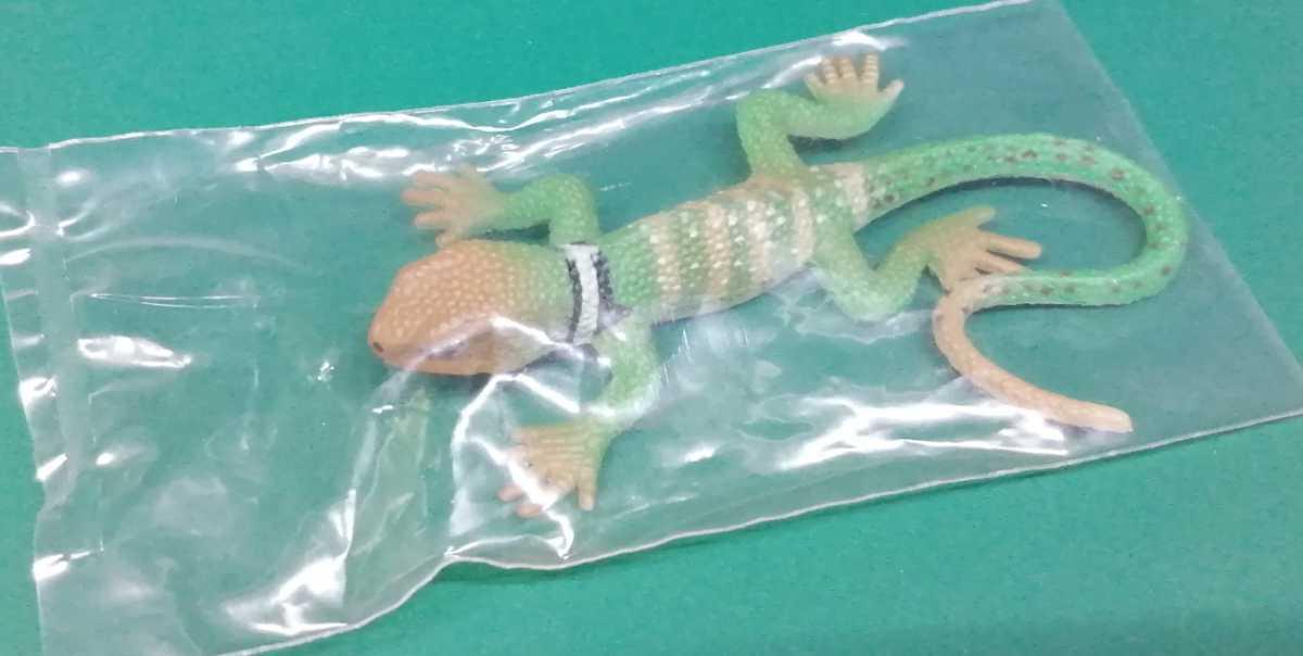 原色爬虫類トカゲ図鑑 クビワトカゲ フィギュア_画像1