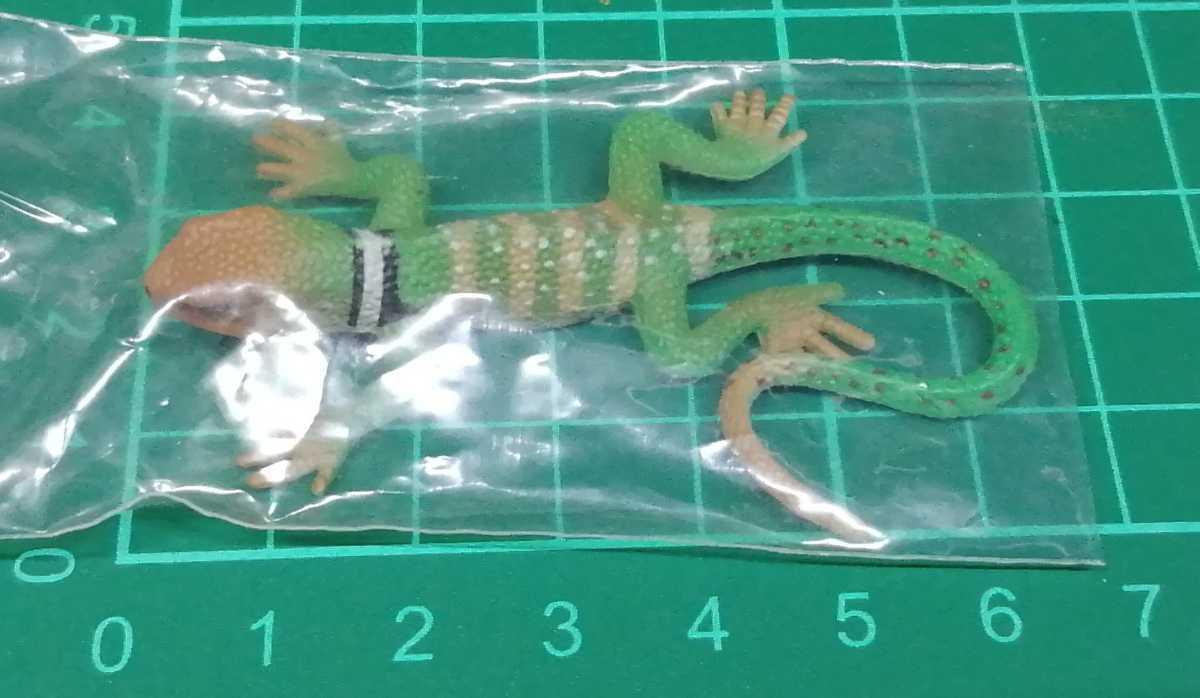 原色爬虫類トカゲ図鑑 クビワトカゲ フィギュア_画像4