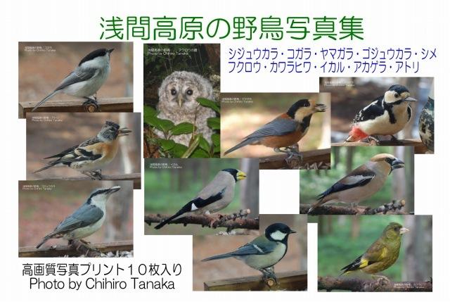+【浅間高原の野鳥写真集】10種類 b-11