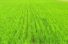 ギフトに令和2年度産 京都府丹後産特別栽培米コシヒカリ白米5㌔  2980円_画像7