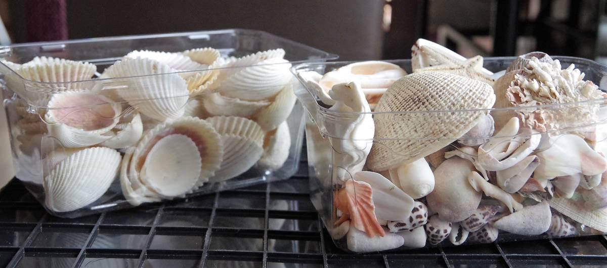 貝殻 総重量2.5㎏ クモガイなど9P   ビーチコーミング 工作 宿題 手芸  自由研究_画像8