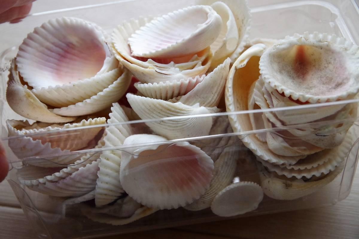 貝殻 総重量2.5㎏ クモガイなど9P   ビーチコーミング 工作 宿題 手芸  自由研究_画像3