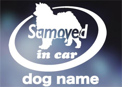 サモエド in car ステッカー。犬ステッカー_画像1