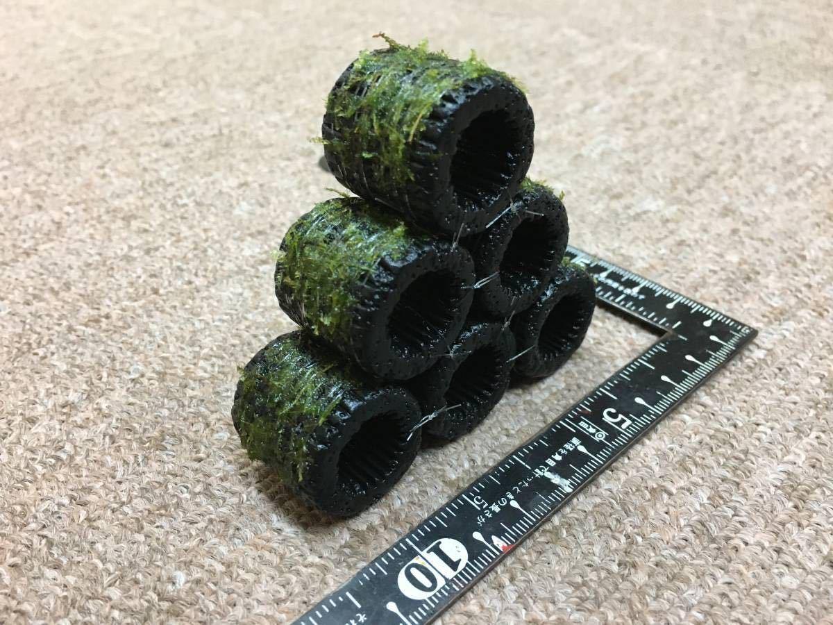 ●送料無料 黒BIGろ材6個ジャイアント南米ウィローモス付○●_画像6の反対側から撮影した画像です。