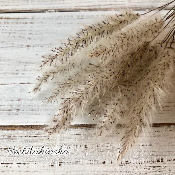チガヤ ショート10本セット 7~9cmナチュラル ドライフラワー花材 ハーバリウム スワッグにおすすめ 星月猫_画像1