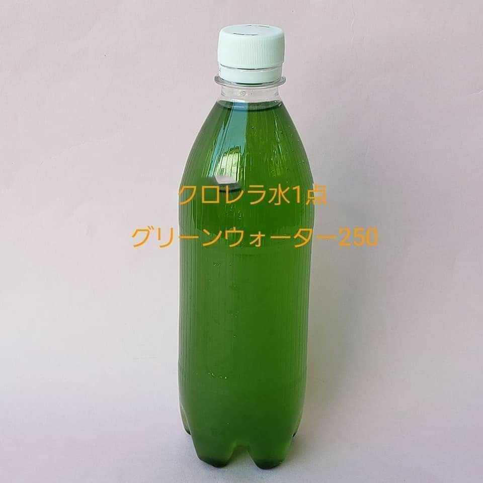 生クロレラミジンコ 水草_画像1