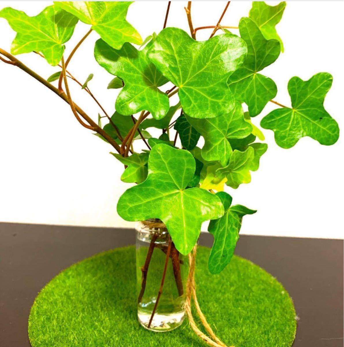 【癒し空間】送料込み アイビー&ワイヤープランツ インテリア 観葉植物&ガーデン