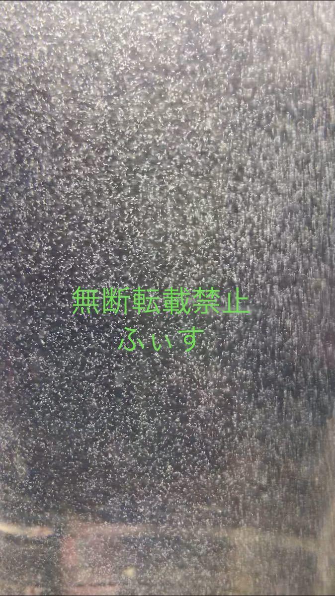 『送料無料』ゾウリムシ100%種水 500ml×3本 _画像2