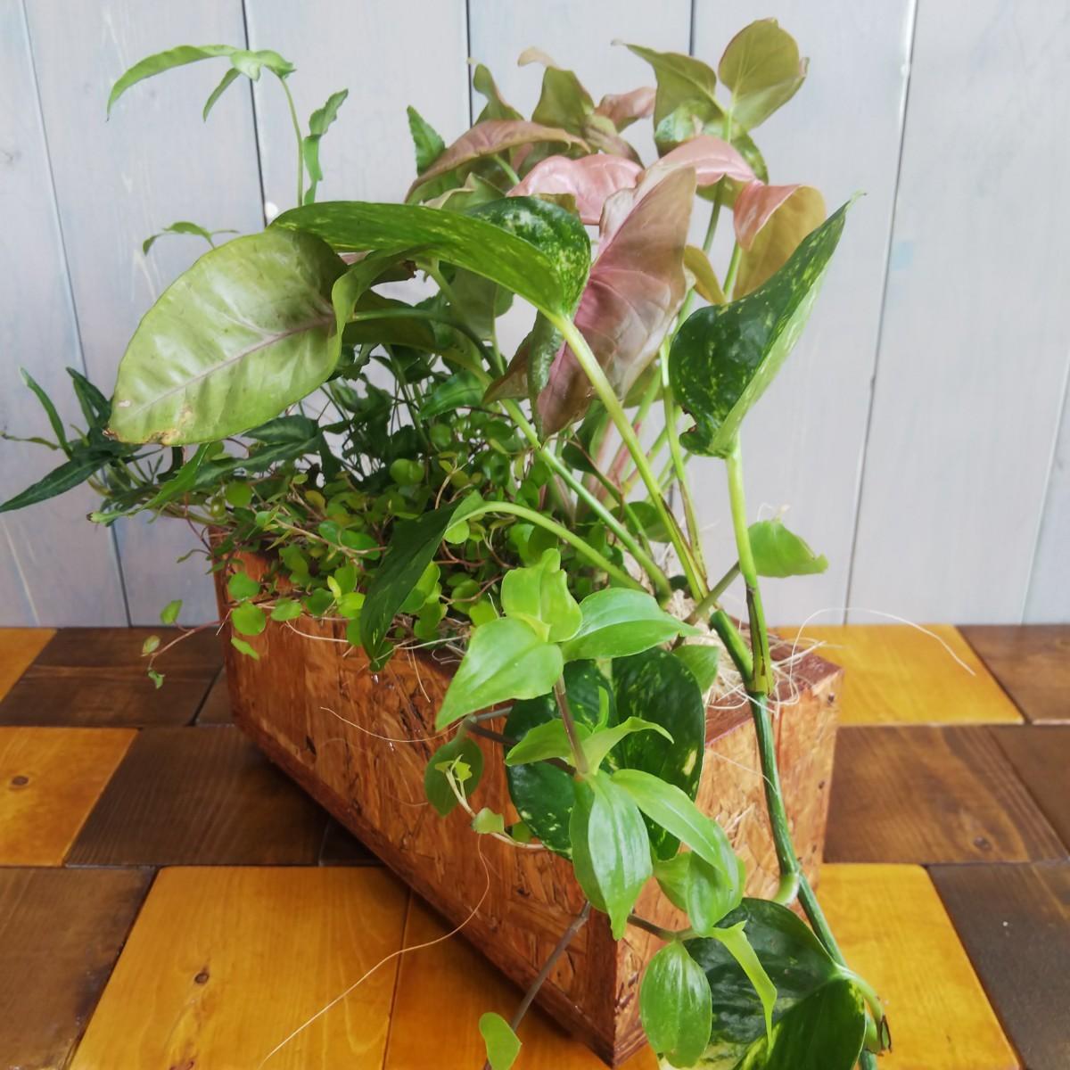 pepper様専用【観葉植物】よせ植え